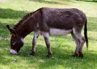 Donkey_1_arp_750px