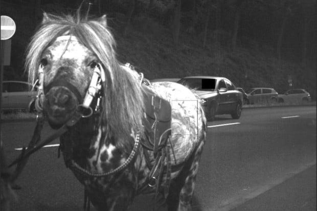 Huch-das-war-aber-hell-Das-geblitzte-Pony-guckt-etwas-verdutzt