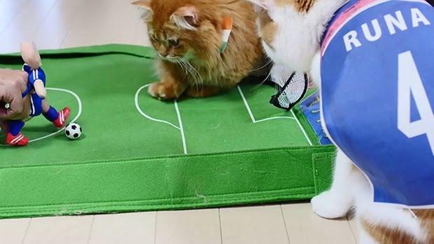 cat-soccer-world-cup-japan-cote-d-ivoire