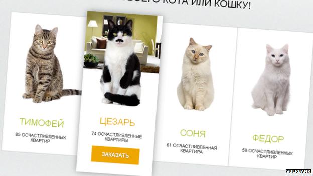 _77193046_russian-cats