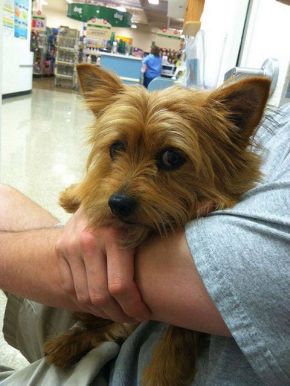 Pets-that-dont-want-to-go-to-the-vets (10)