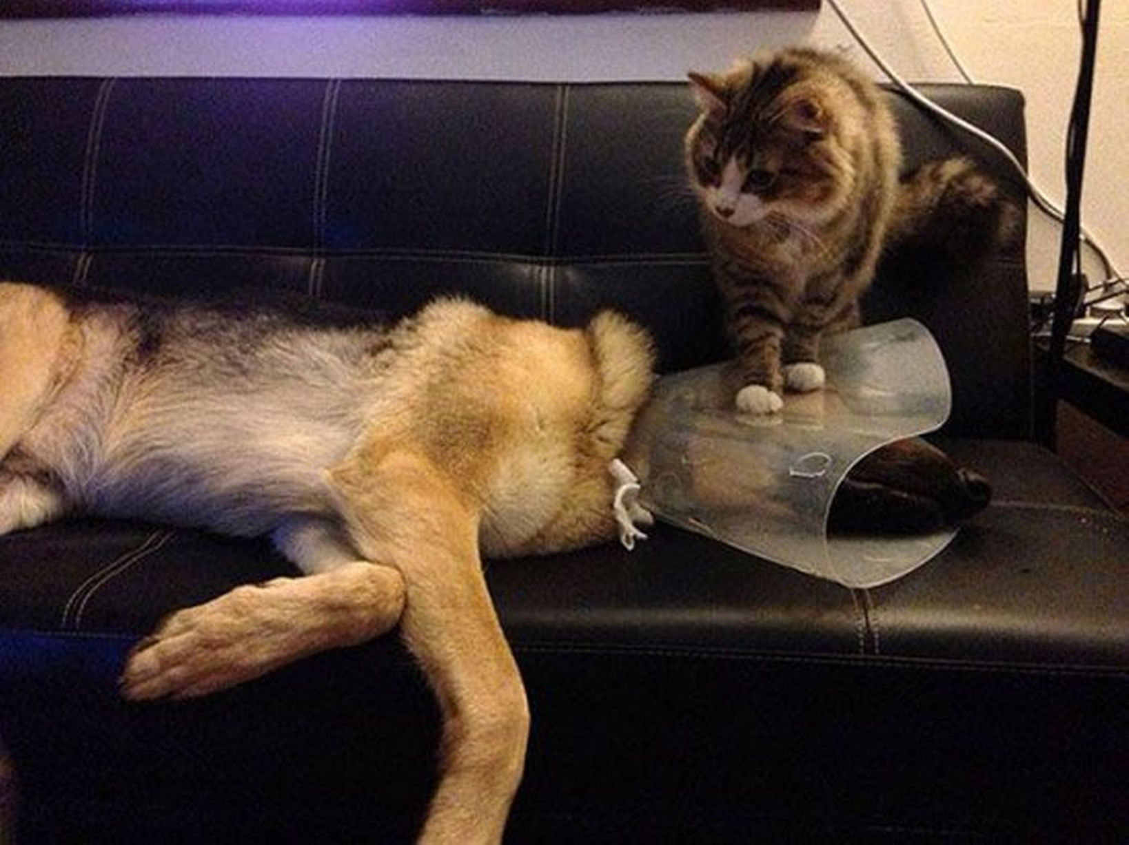 Pets-that-dont-want-to-go-to-the-vets (11)