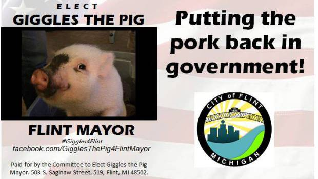 giggles-the-pig-2
