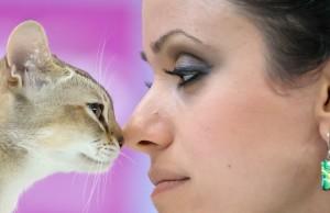 romania-international-cat-show (1)