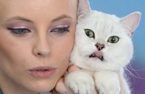romania-international-cat-show 1