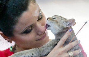 romania-international-cat-show (2)