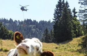 hilfe-von-oben-fuer-durstige-kuehe-die-schweizer-armee-versorgt-im-kanton-waadt-mehrere-alpen-mit-wasser--auch-freiburg-bittet-um-solche-hilfe-