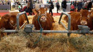 des-vaches-au-salon-de-l-agriculture-le-27-fevrier-2016-a-paris_5550839