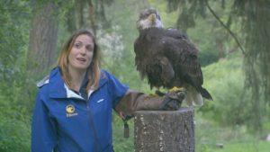 hercules-the-eagle