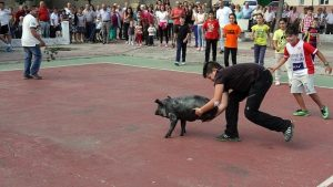 soltar-cerdos--620x349