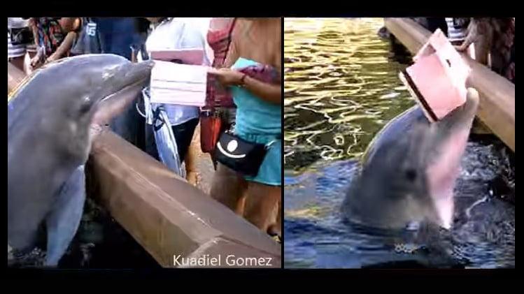 dolphin-ipad-080816