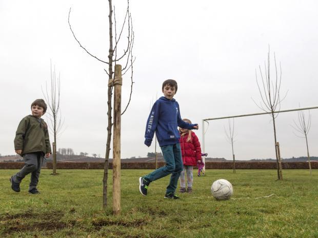 種樹種入球場 蘇格蘭地方議會被迫道歉