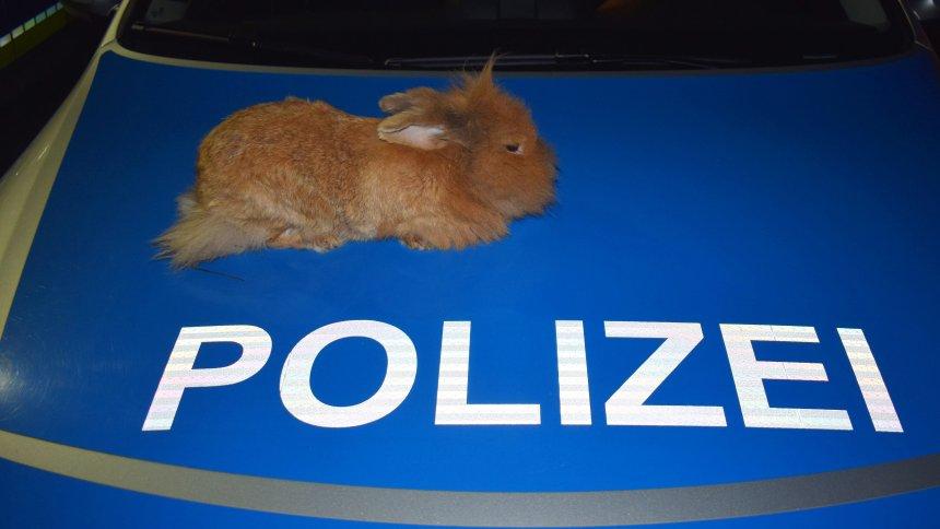 德警察發現兔仔車蓋過夜因為夠暖?