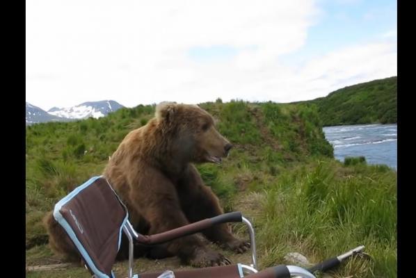 美攝影師奇遇:野熊突然坐低一起睇風景