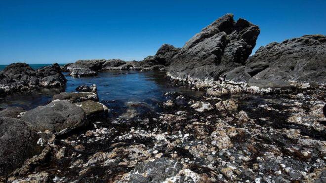 紐西蘭地震搞到海岸升高 有利有弊