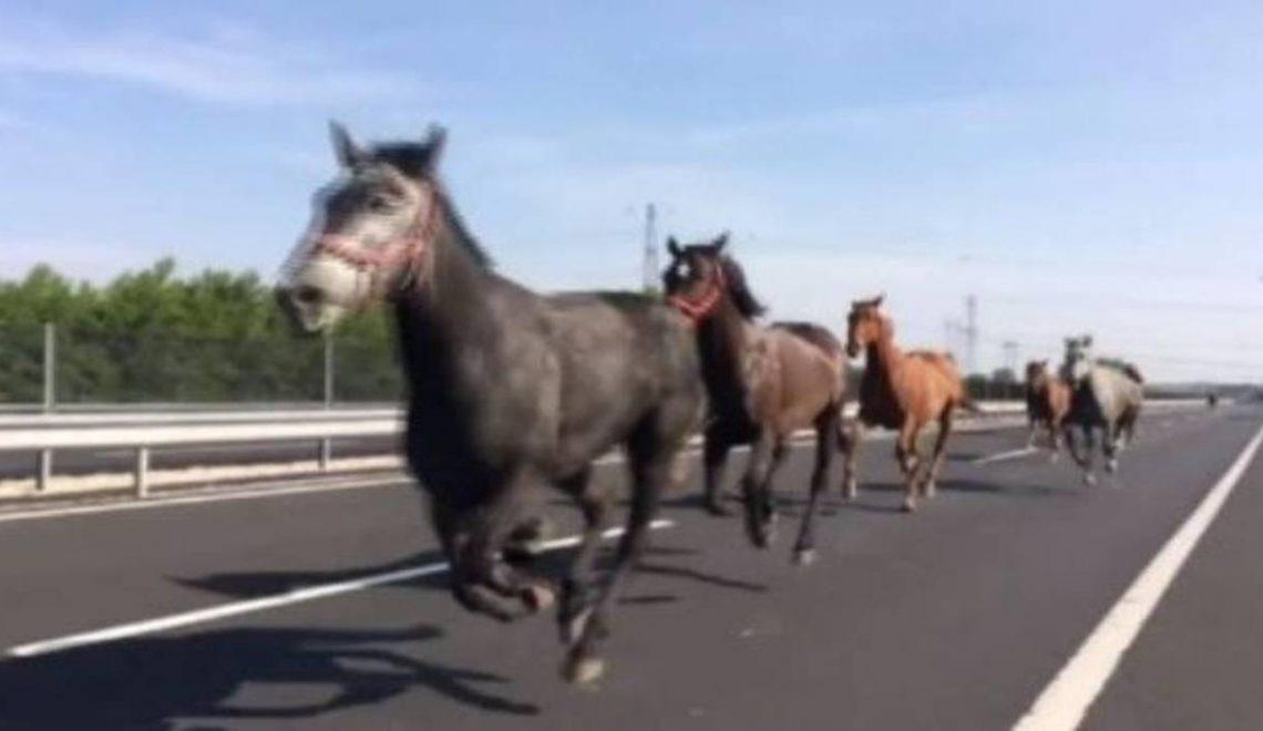 匈牙利公路奇景:萬馬奔騰