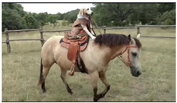 美帝最新:狗騎馬咁過癮?