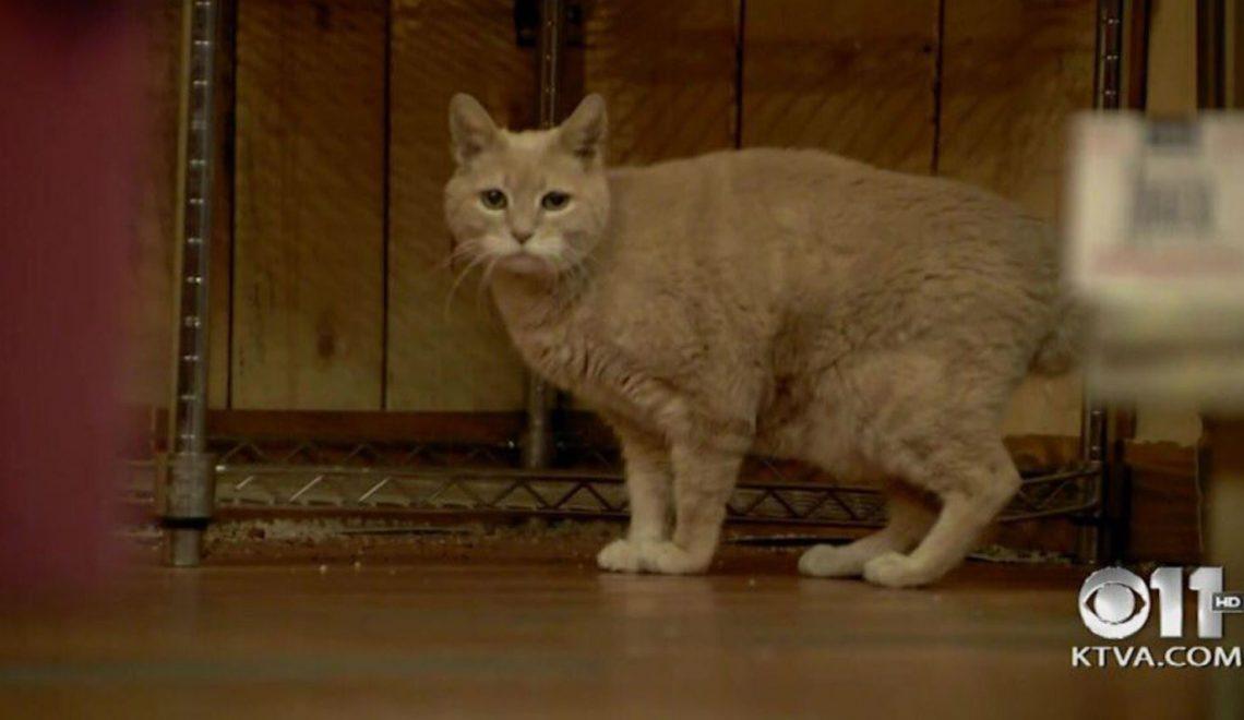 美帝大陸州貓市長逝世 預料會有繼承「貓」