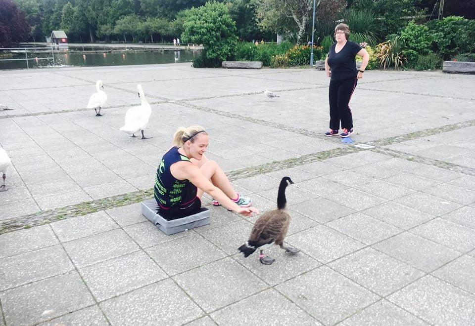 英格蘭人鍛鍊 連鵝都受「感召」一齊環湖跑