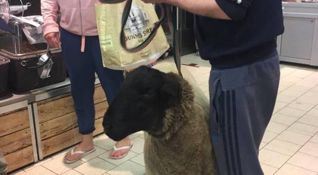 北愛男生用「寵物羊」衝撞超市禁狗規定