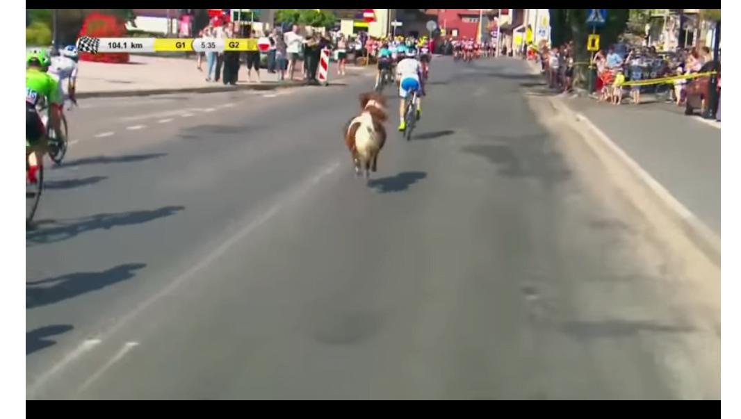 環波單車賽 驚現小馬同奔