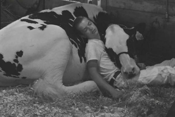 美男與牛同眠 構成美好畫面 網上瘋傳