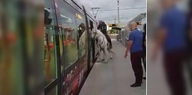法國男為咗找數 騎馬衝入路面電車?