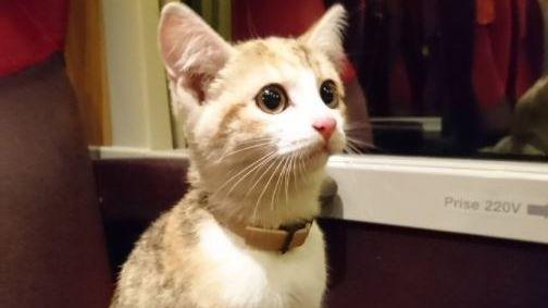 法國國鐵職員俾失貓跟住行 最後係車站職員休息室 享有皇家待遇