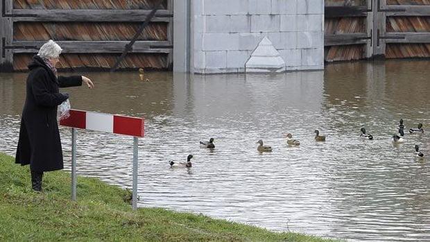 荷蘭擔心水質污染 禁止餵鴨 甚至設立熱線俾人舉報