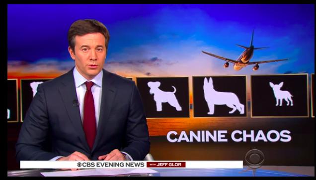 福景魚拉特航空同狗過唔去 寄艙去美國中部寵物犬竟然去咗日本?