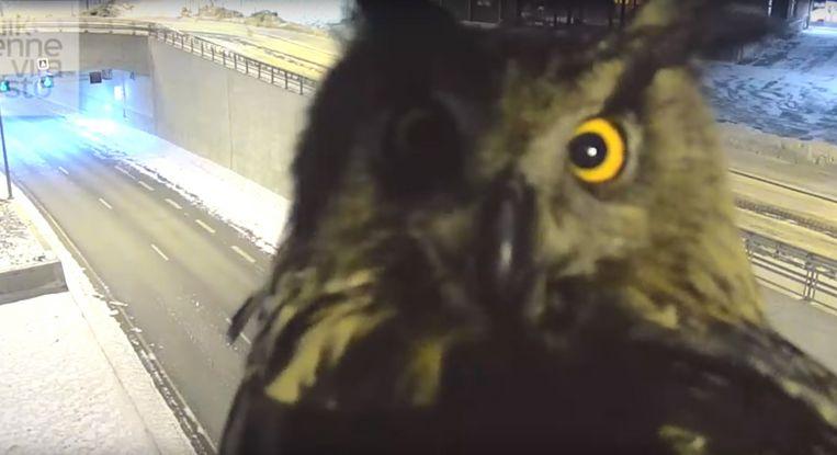 芬蘭離奇viral: 交通省將貓頭鷹「襲擊」快相機變成網上大熱?