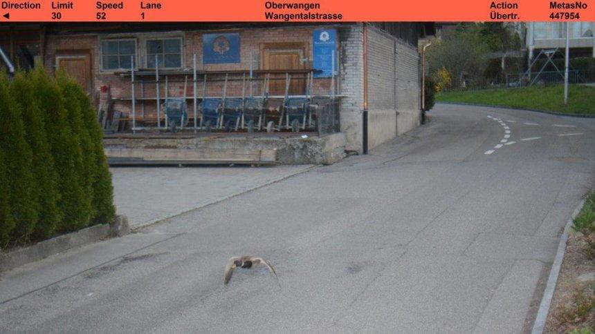 瑞士地方快相機錄到野鴨飛行「超速」政府關公玩膠表示唔知有無寄出罰單