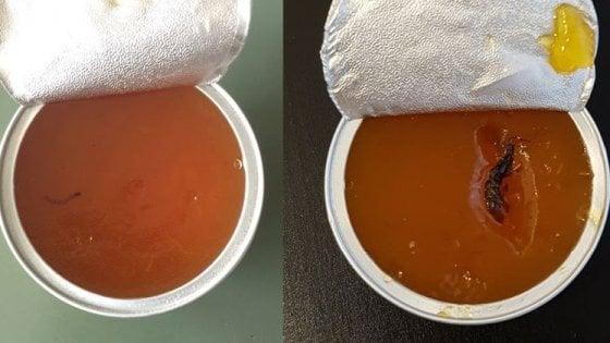 學校膳食果醬有蟲 米蘭政府大檸樂