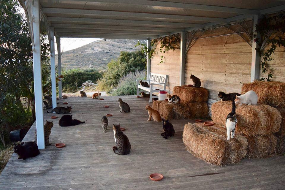 希臘推出終極貓奴旬工 千歐個月但可以照顧55名小主人?