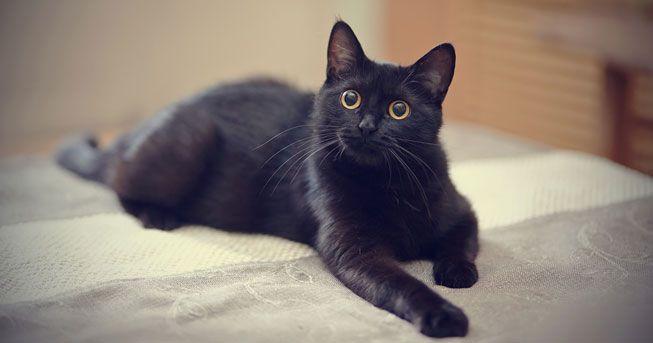 愛爾蘭愛護動物協會 希望市民領養更多黑貓