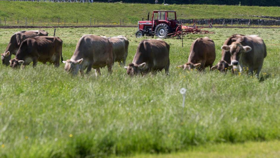 瑞士將公投決定是否准許牛角自由生長