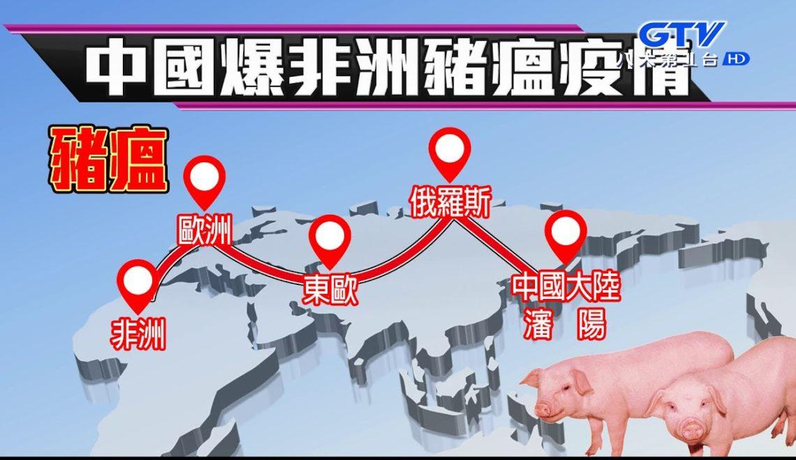 非洲豬瘟已從露西亞傳入多個國家 比利時殺豬 英國警告國民勿帶豬肉製品入境