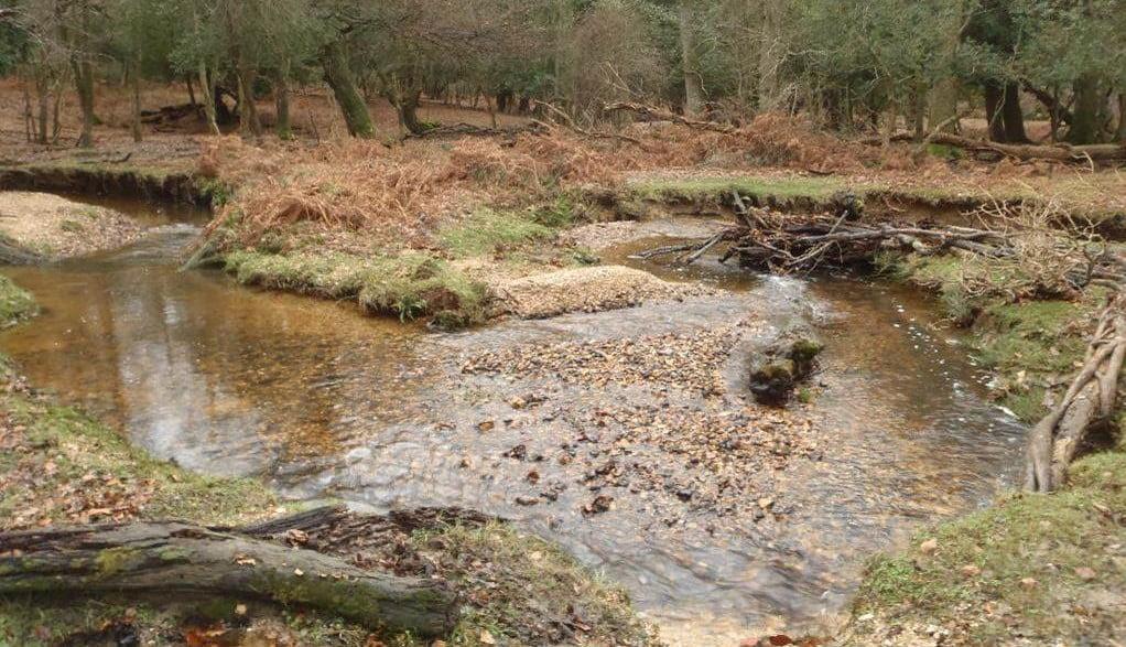 英國生態學新潮流:恢復維多利亞時代嘅彎曲河流