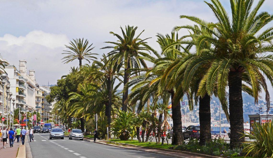 南法棕櫚樹受埃及蟲害影響 或遭滅絕