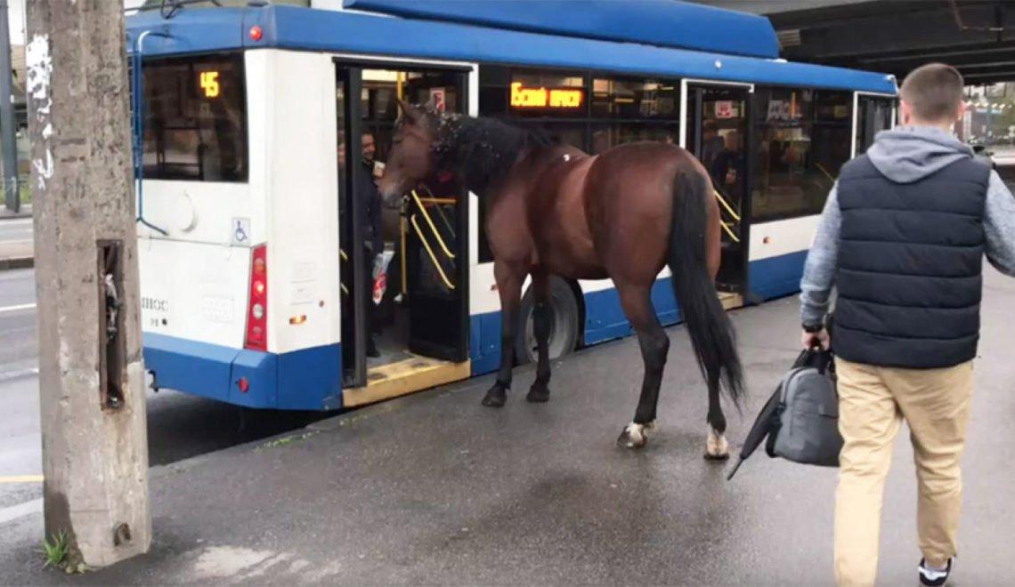 露西亞巴士站奇景:唔知邊度走出黎隻馬要上車
