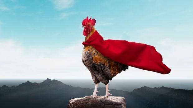 電影明星雞被狗咬死 只賠償普通雞價15歐 加訓練費