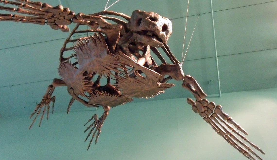 研究顯示古代陸龜有「重量優勢」