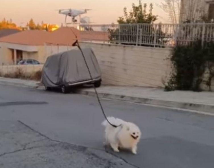 地中海島民離奇方法 隔離中放狗