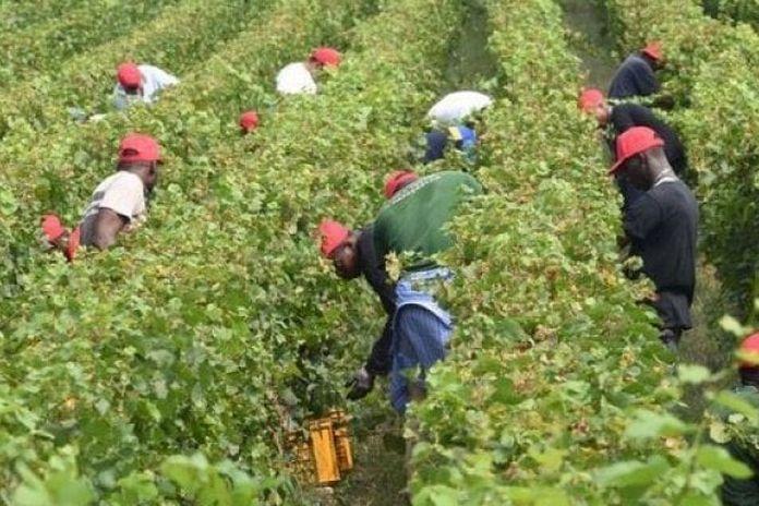 拒絕提供外勞口罩 義大利農場主被捕