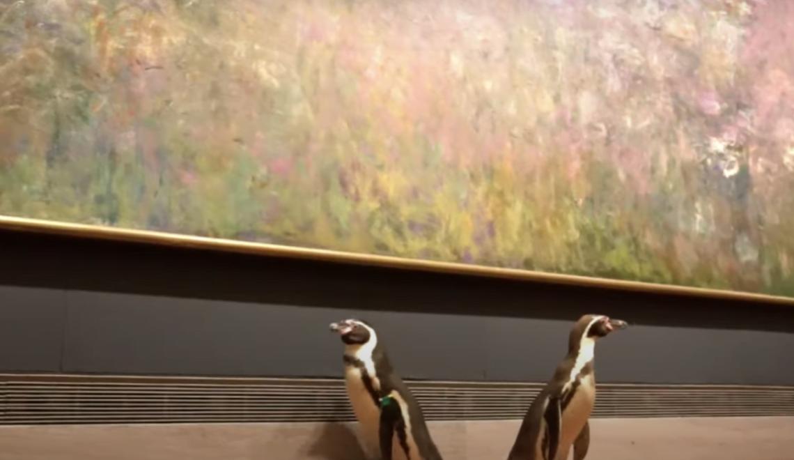 美國美術館重開 搵企鵝賣廣告?