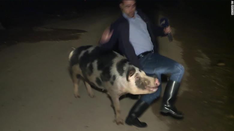 希臘電視新聞記者俾豬追咬 成網上大熱