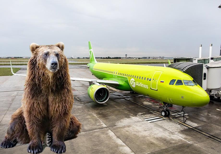 露西亞跑道發現熊 飛機被迫取消降落