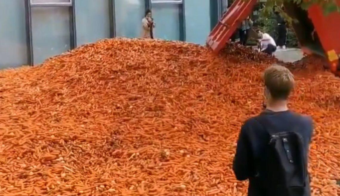 倒29噸胡蘿蔔就係藝術品?