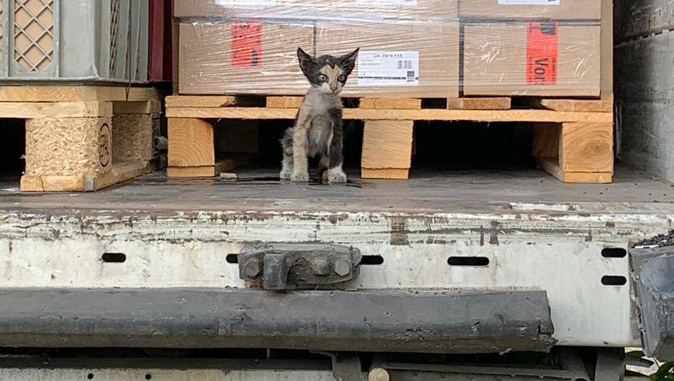 突尼西亞貓唔知點解入境德國
