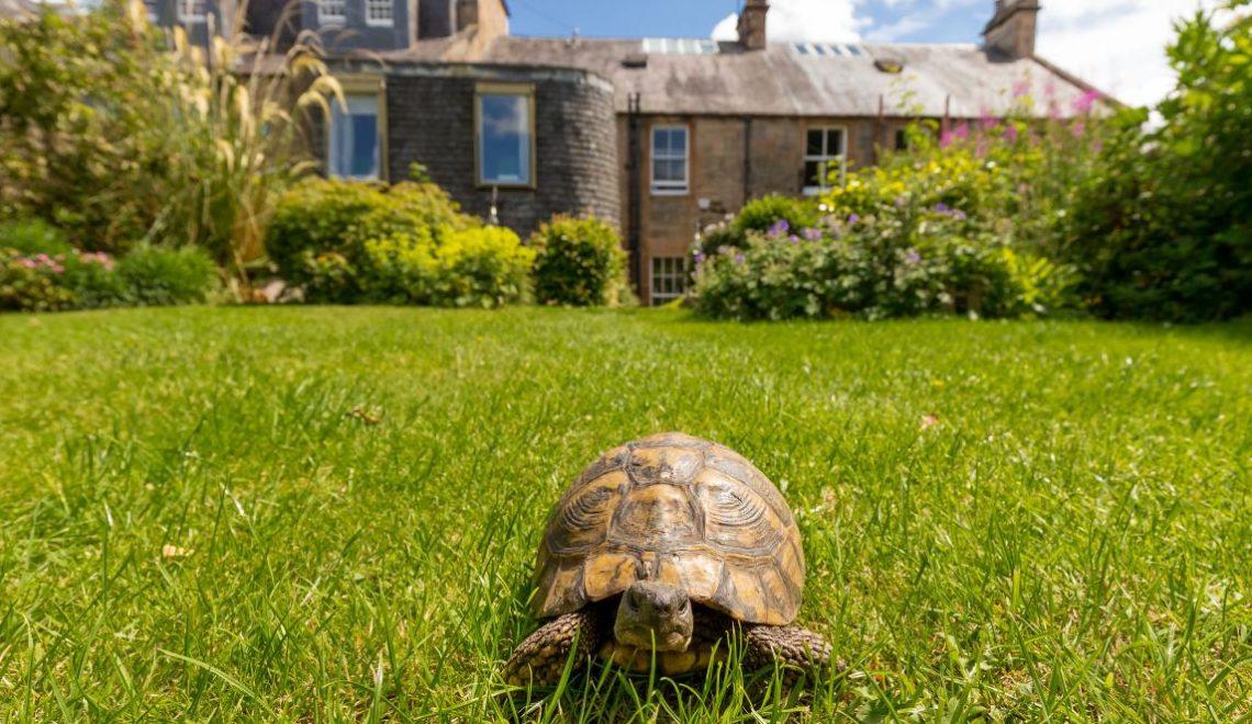蘇格蘭屋主減價出售獨立屋 買家要承諾養起隻陸龜?